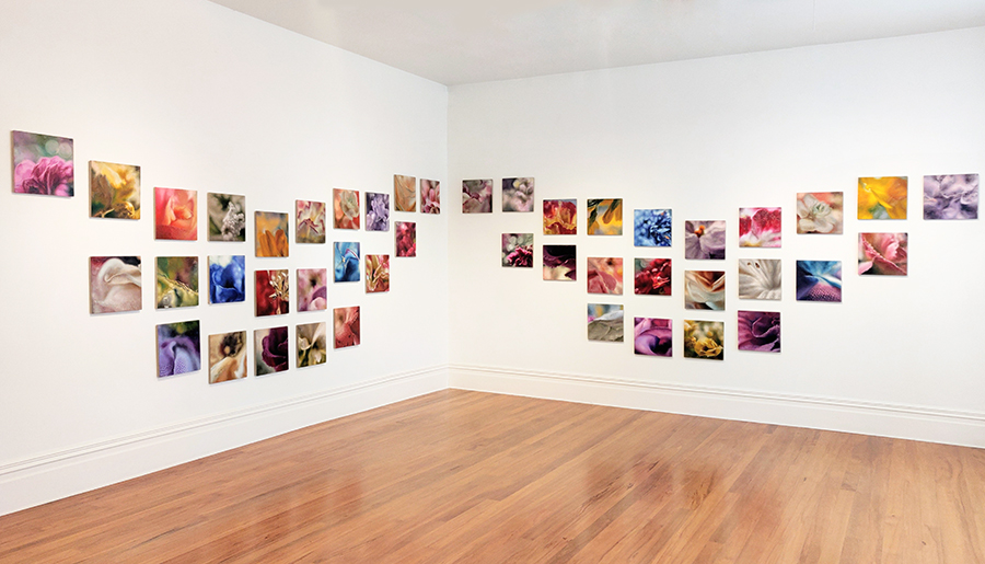 Install image of 45 'Bouquet' paintings by Viv Kepes
