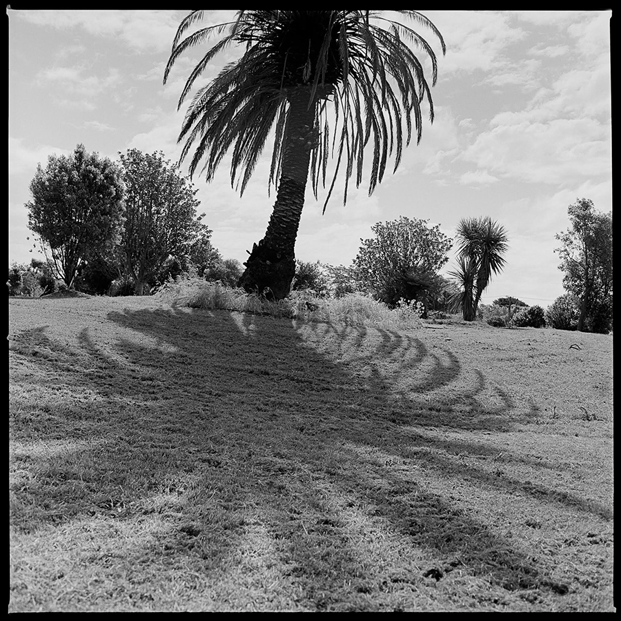 'Palm Study #1, Between Silverdale Place and Morris Street, Avonside, Christchurch, 2017' photograph, 230x230mm